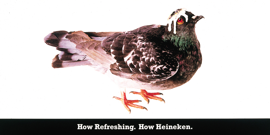 Heineken-Pigeon